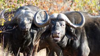 Deadly 60 - January 8, 2016