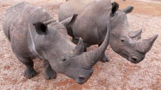 Deadly 60 - February 5, 2016