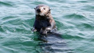 Deadly 60 - June 7, 2016