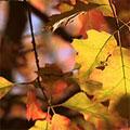 Autumnwatch Unsprung